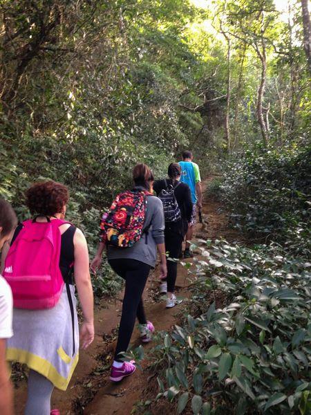 Trilha para Pedra Bonita Rio De Janeiro Brasil Brazil Floresta Da Tijuca