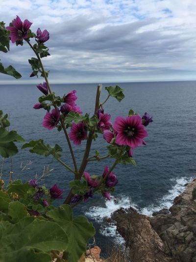 Pink flowers in sea