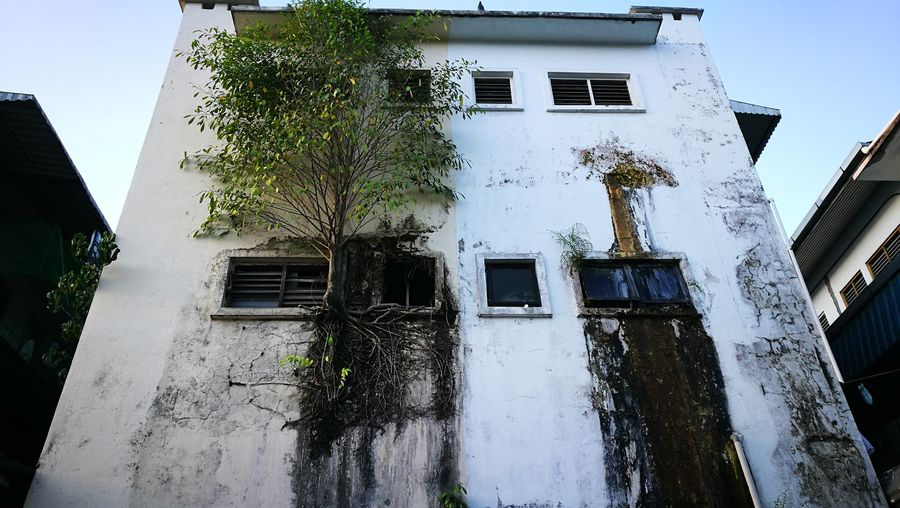 Architecture Building Exterior Tree Outdoors Built Structure Window Ipohtown Sooc - Straight Out Of The Camera Urban Gardening