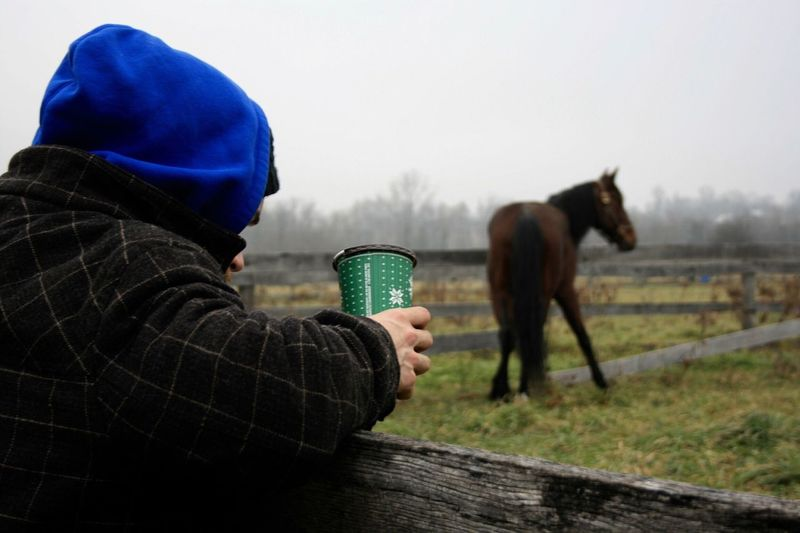 Man Holding Disposable Cup By Ranch Against Horse