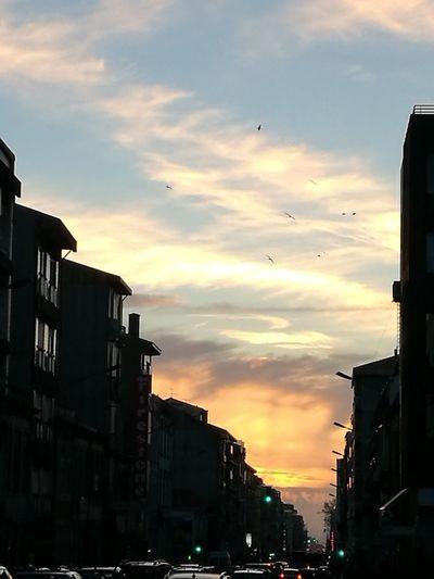 Rua da Constituição Sunset Flying Sky Street Light Travel Street Portugal Purist No Filter Porto Portugal 🇵🇹 Purist No Edit No Filter Porto Architecture Travel Destinations