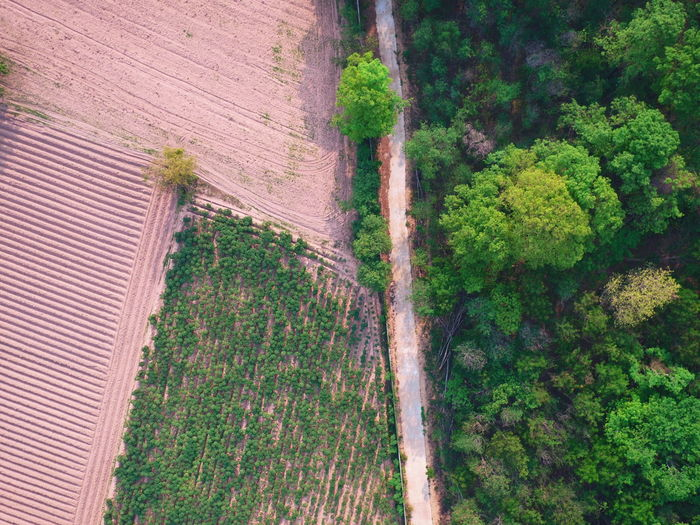 Aeria view of farm and forest