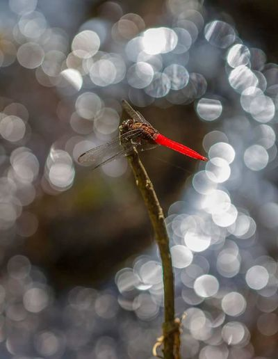 Bokeh Photography Taking Photos Hanging Out Hello World EyeEm Best Shots Dargonfly This Is Thailand
