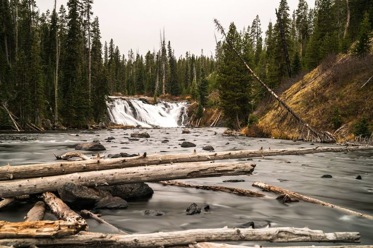Fallen Tree Trunks In River At Yellowstone National Park