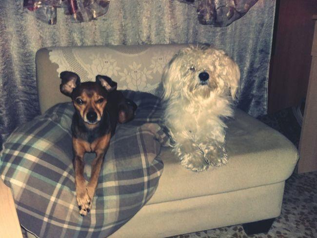 Dogs Of EyeEm Mydogs Love To Take Photos ❤ Animal Themes Dog