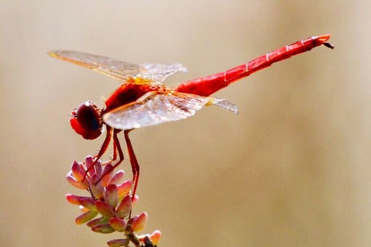 Red Nature Insect Beauty In Nature Animal Themes