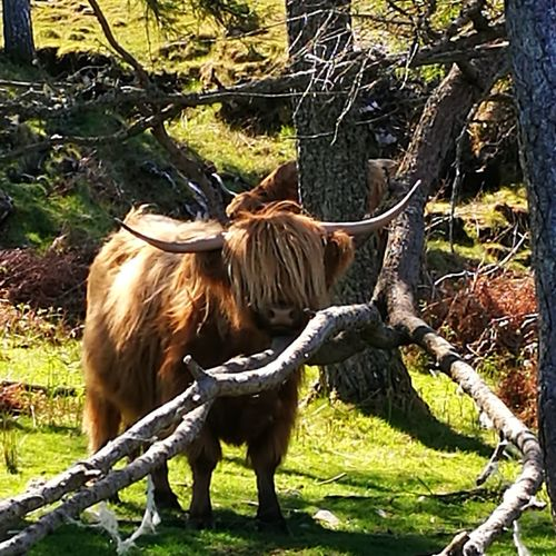 Animal Hair Domestic Animals Nature Beauty In Nature Outdoors Isle Of Mull Animal Wildlife