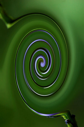 Fine Art Photography Close-up Concentric Day Green Color Indoors  No People Spiral