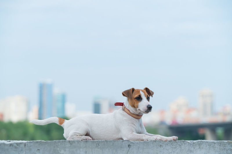 Portrait of a dog looking away against sky