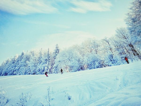 Skiing Winter Winter Trees Snow Skiers Blue Sky White Blue Blue Wave