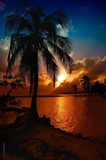 Guadeloupe Guadeloupe-F.W.I Palm Tree Reflection Sunset Beach Tropical Climate Beauty In Nature Guadeloupeislands gua Landscape Dramatic Sky Postcard Tree Sunlight Nature Cloud - Sky Palm Tree Sea Tourism