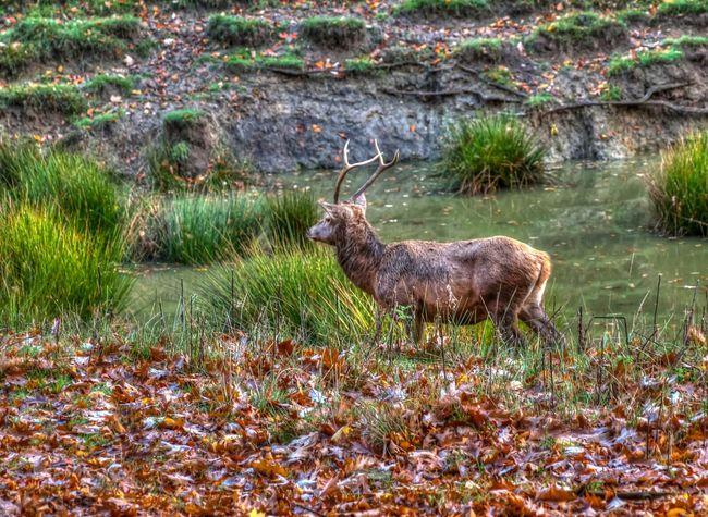 Colors Of Autumn EyeEm Best Shots - Landscape Nature_collection Landscape_Collection