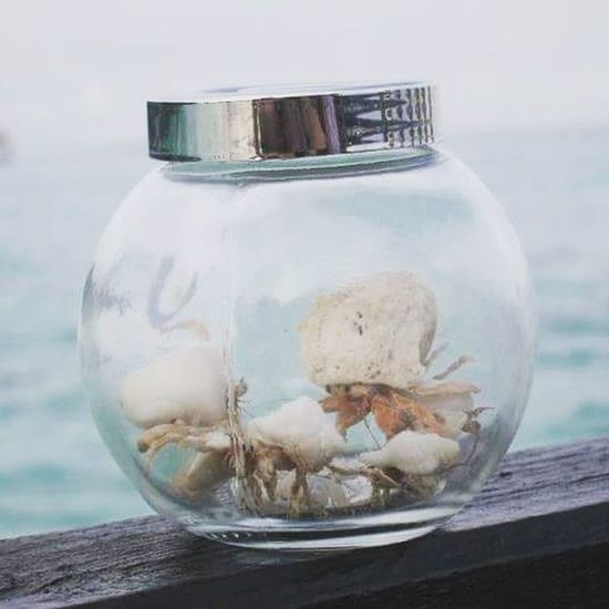 Hermit Crab in Maldives Jar Water Fishbowl Close-up No People Sea Day Outdoors Beauty In Nature Lost In The Landscape Beach Vacations Crabs