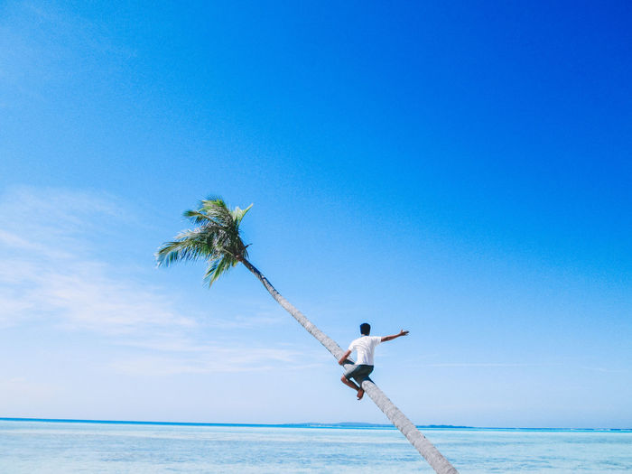 Low angle view of palm tree by sea against blue sky