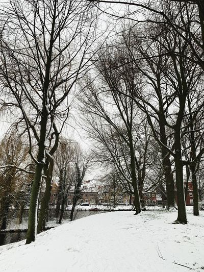 Snow Cold Temperature Winter Bare Tree Tree Plant Branch Covering Land Nature White Color Scenics - Nature Tranquility Beauty In Nature No People Field Tranquil Scene Day Non-urban Scene Outdoors Snowing