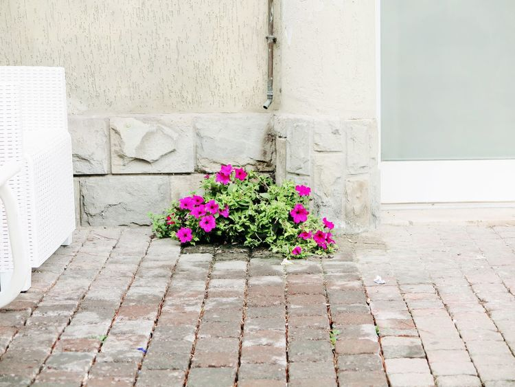 Chair City Entry Flowers,Plants & Garden Nature On The Way Paved Wall Beauty Building Day Flower Flowers Ground House Italy Milano Marittima Nature Nature Vs City No People Outdoors Pink Color Street Photography Streetphotography Wall - Building Feature
