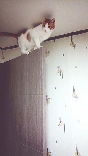Cat 더 높이