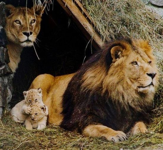 Brave family First Eyeem Photo