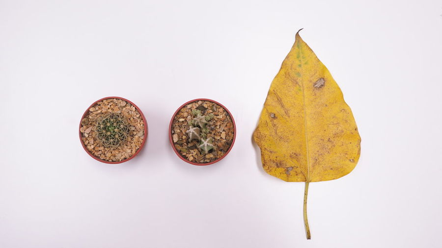 Close-up of yellow autumn leaves over white background