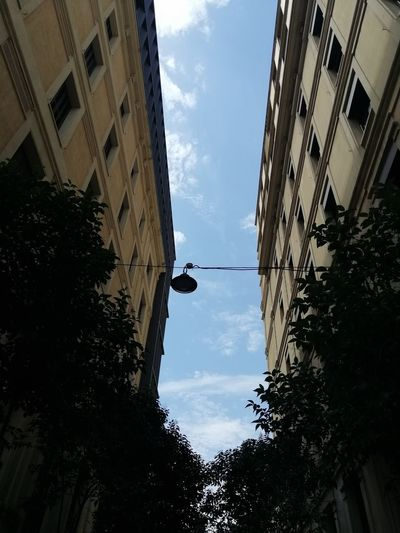 Sky City Tree