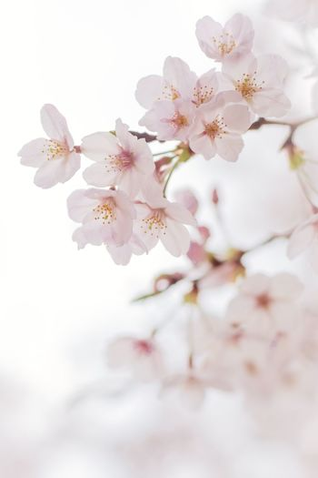 Flowers Against White Background