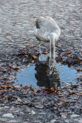 High angle view of bird drinking water