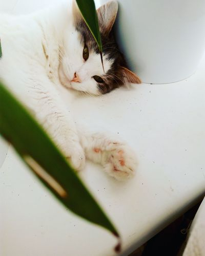 Portrait Of Cat Resting On White Table