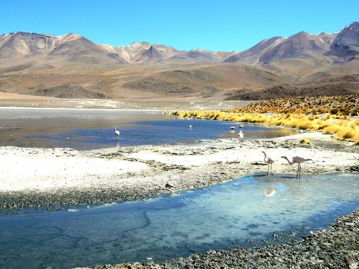 Laguna Cañapa Mountain Lake Scenics Nature Beauty In Nature Landscape Desert Flamingo Tranquility Outdoors Day Water Salt Flat No People Travel Destinations