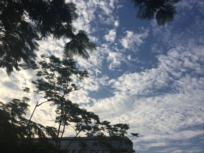 Low Angle View Sky Tree Cloud - Sky Nature No People Day Outdoors Growth Silhouette Beauty In Nature Branch IPhoneography