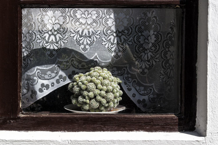 Potted Plant On Window Sill During Sunny Day