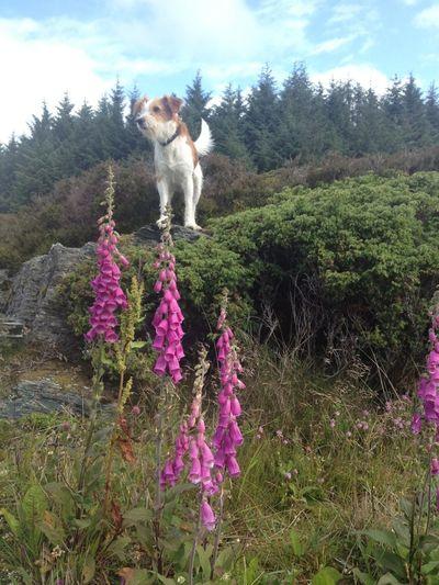 Summertime, kromfohrlander, my Dog I#in Bømlo Relaxing Nordic Light Norway