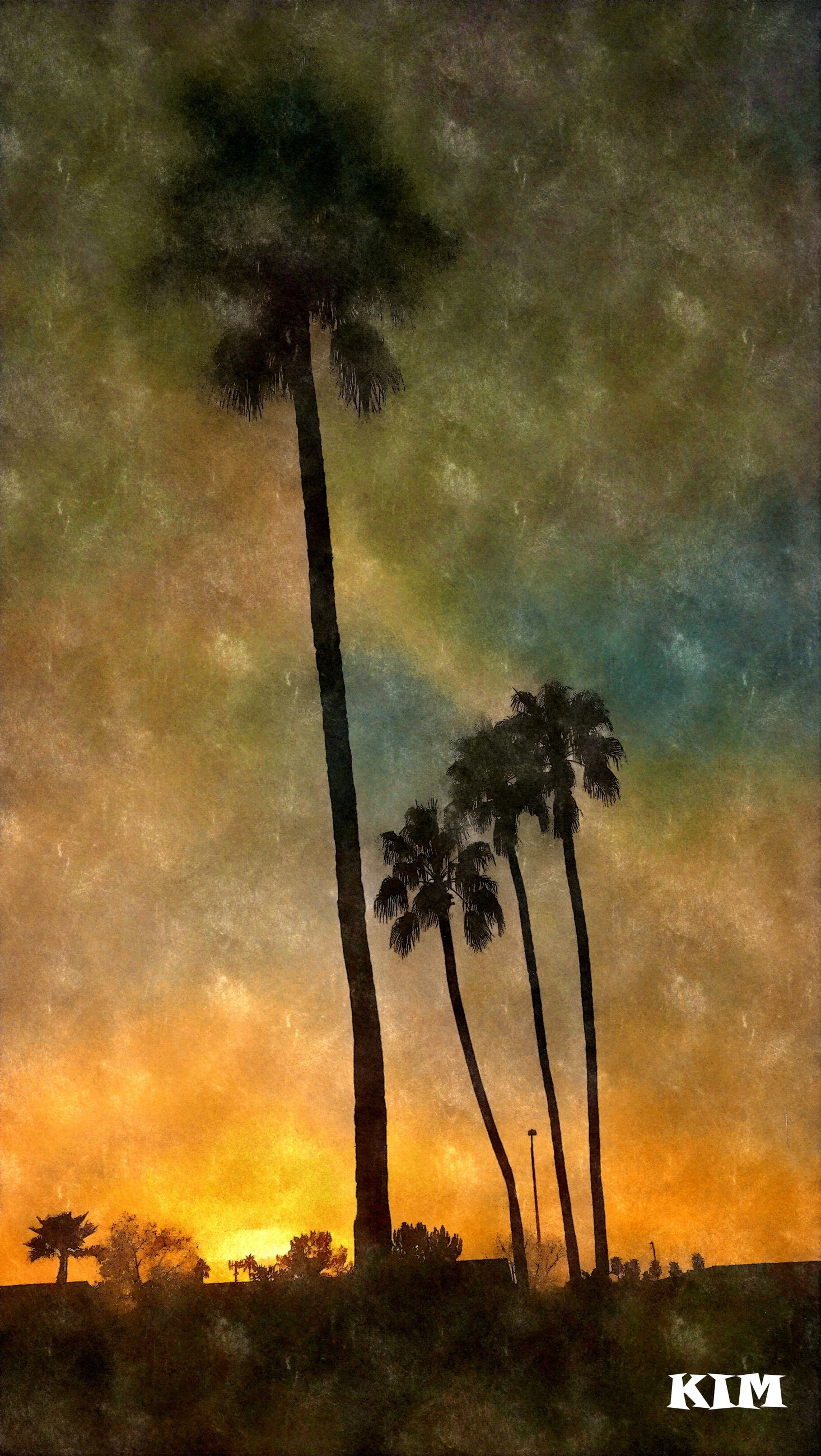 tree, nature, sky, growth, beauty in nature, no people, outdoors, scenics, tranquility, palm tree, sunset, milky way, star - space, cactus, night, galaxy, astronomy