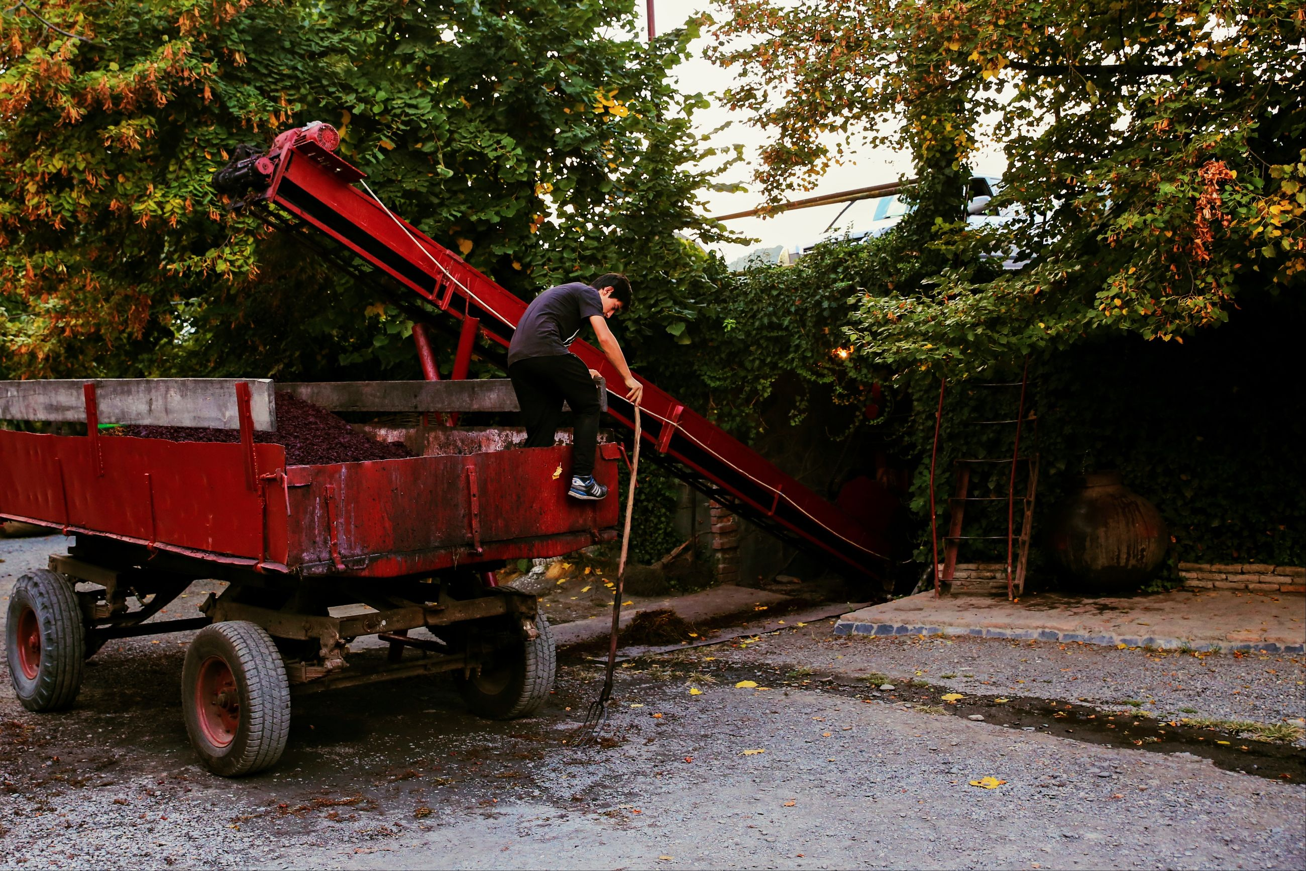 tree, land vehicle, transportation, mode of transport, outdoors, commercial land vehicle, no people, nature, day