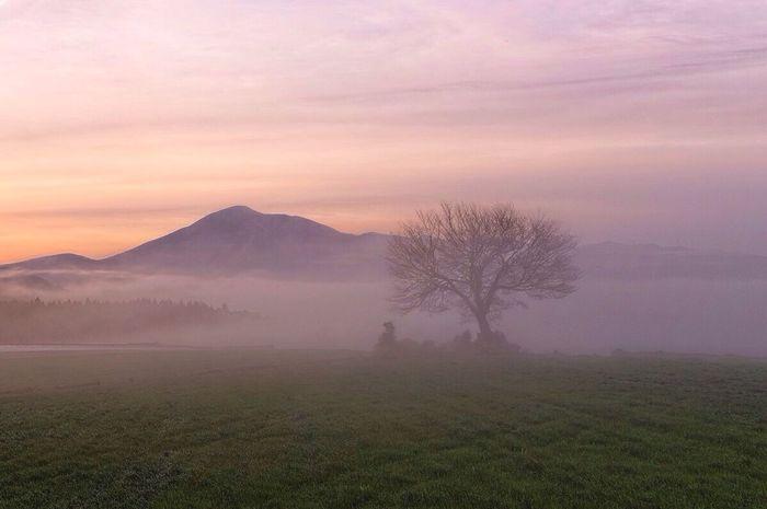熊本県 Chellyblossom Misty Morning HDR Hdr_Collection Hdr Edit