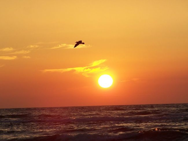 Sunset Flying Sea Beauty In Nature Sun Nature Horizon Over Water