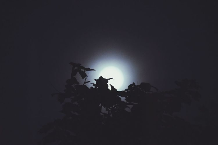 Moon Nature Nature_collection Nature Photography Taking Photos Moonlight Moon Silhouette First Eyeem Photo Silhouette_collection EyeEm Nature Lover EyeEm Men Silhouette Army Soldier Illuminated