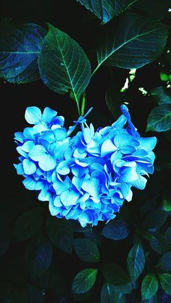 🌷 Flowers 🌹
