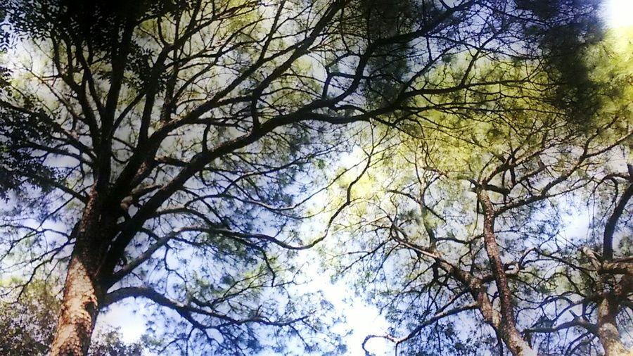 Enjoying Life Showcase June Kasauli Pines Forest