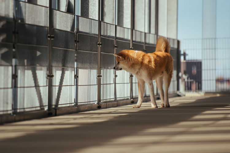 Dog standing by railing in city