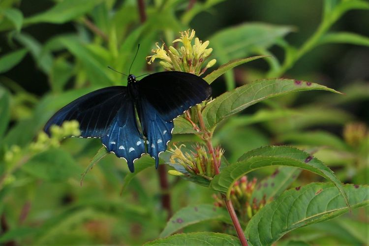 Plant Animal Wildlife Animals In The Wild One Animal Plant Part Growth Leaf Beauty In Nature Invertebrate Close-up Animal Animal Themes Green Color Insect Animal Wing Nature Flower No People Butterfly - Insect Pollination
