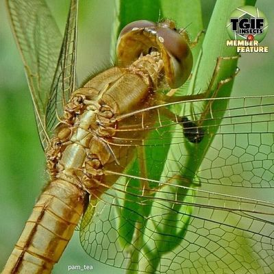 ---- Repost ---- So many thank you @tgif_insects for featuring my photo in to your amazing gallery, im really apreciate it, keep tagging Tgif_insects Tgif_insects_mbr (member) for your chance to be featured.