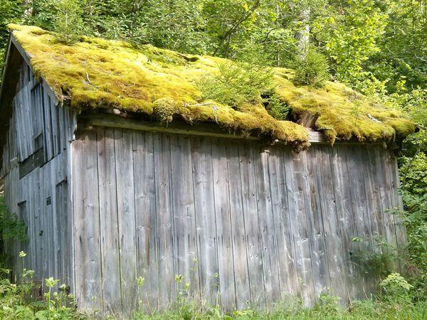 Barn covered with moss in Altaussee, Austria Altaussee Austria Barn Dach Holz Moos Moss Roof Salzkammergut Scheune Wald Wood Österreich