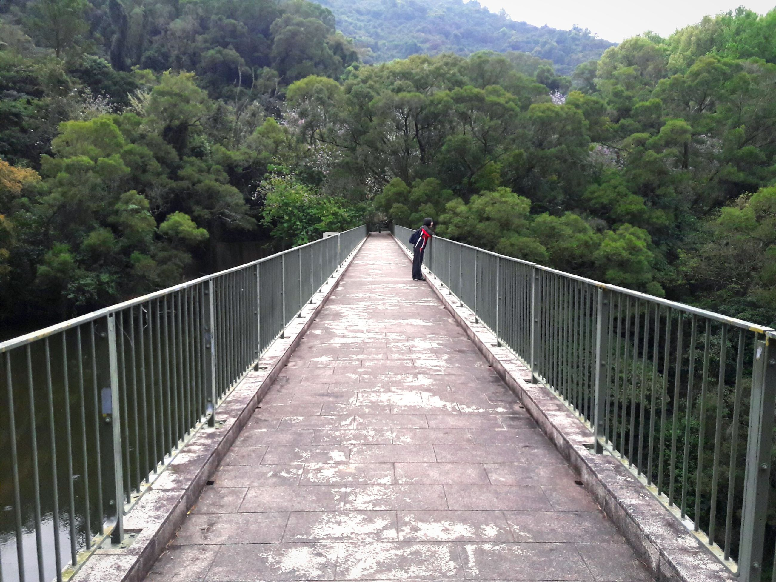 railing, tree, the way forward, nature, bridge - man made structure, outdoors, footbridge, day, real people, beauty in nature, mountain, growth, full length, one person, sky, people