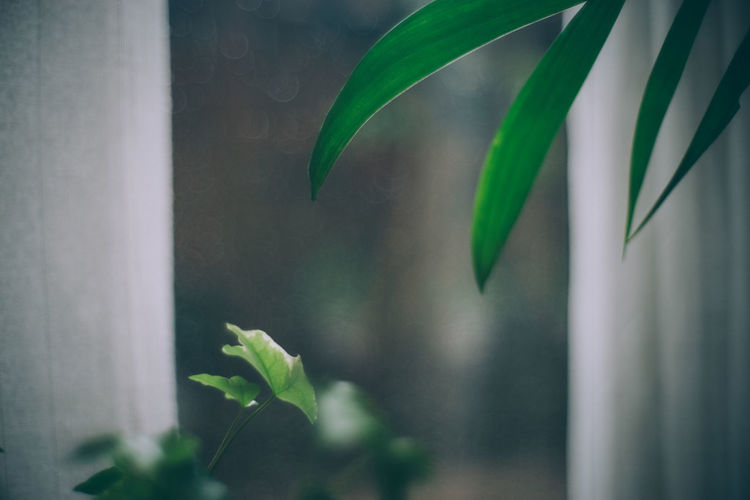 Plant Part Leaf Growth Plant Green Color Close-up No People Nature Beauty In Nature Day Selective Focus Focus On Foreground Window Freshness Outdoors Fragility Vulnerability  Plant Stem Glass - Material The Minimalist - 2019 EyeEm Awards