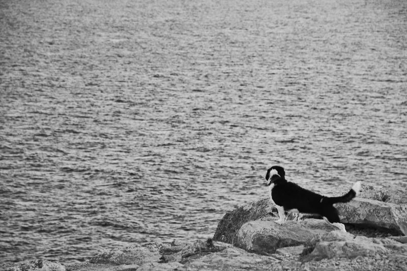 Sea Life Dog Love See Seeing The Sights Waves Pet Point Of View Black And White B&w Rocks Formentera Cap De Barbaria Summer 2016 Monochrome Photography