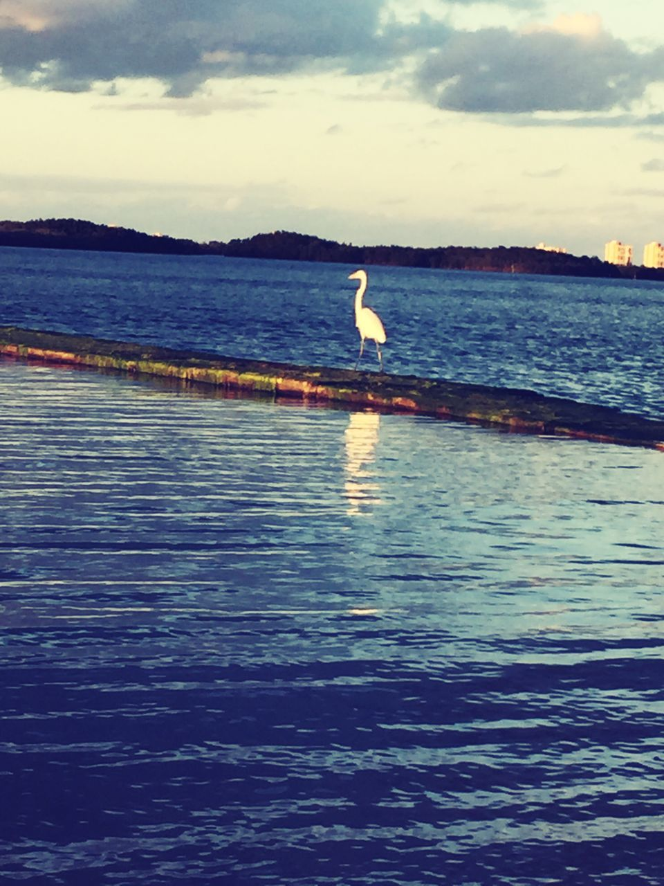 water, sea, nature, sky, sunset, beauty in nature, scenics, cloud - sky, bird, one animal, outdoors, silhouette, tranquility, animal themes, day, no people