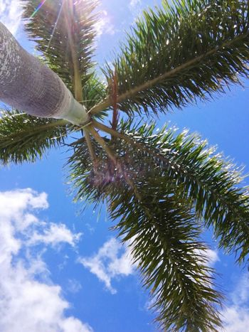 Tree Low Angle View Palm Tree Growth Nature Sky Day Branch No People Beauty In Nature Outdoors Close-up The Great Outdoors - 2017 EyeEm Awards Live For The Story Sommergefühle