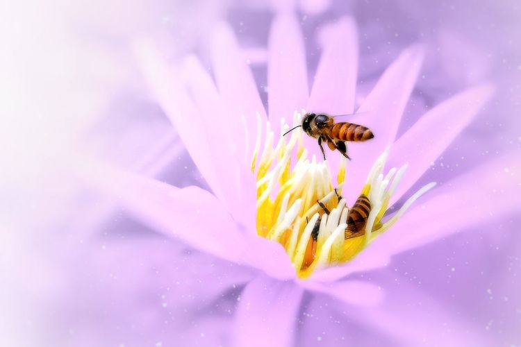 Insect Flower Animals In The Wild Fragility Animal Themes Bee Nature One Animal Animal Wildlife Petal Plant Honey Bee Close-up Beauty In Nature Outdoors No People Freshness Day Flower Head Growth