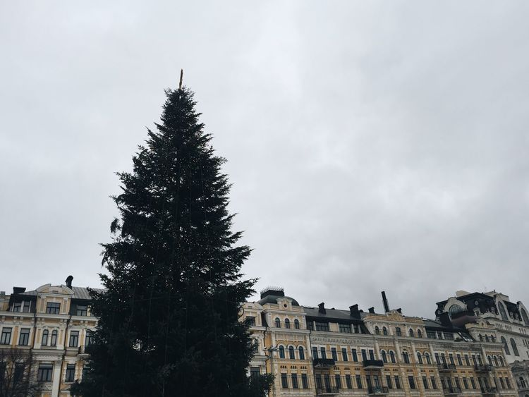 Architecture Building Exterior Built Structure Christmas Christmas Spirit Christmas Tree City Cloud - Sky Kiev Nature New Year New Year Around The World Outdoors Sight Seeing Sky Tourism Travel Destinations Tree Ukraine Walking