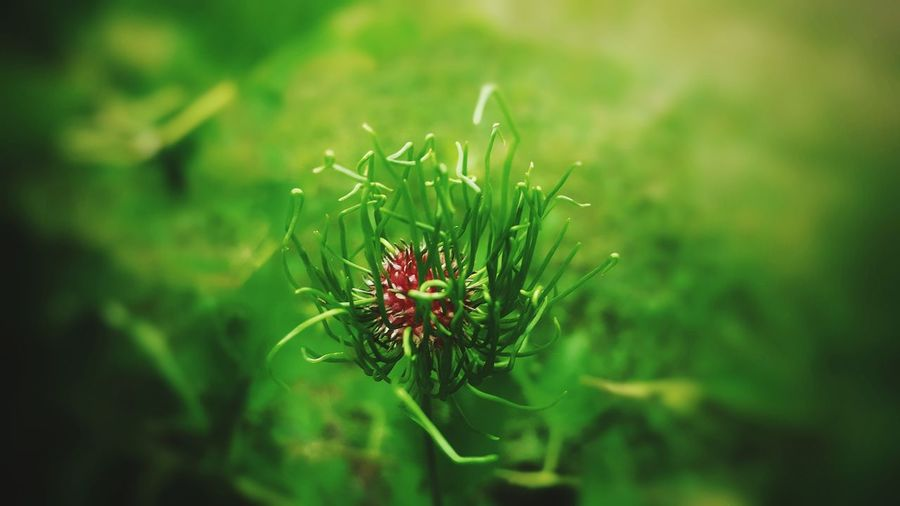 green thingy...